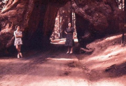 Redwoods004 copy